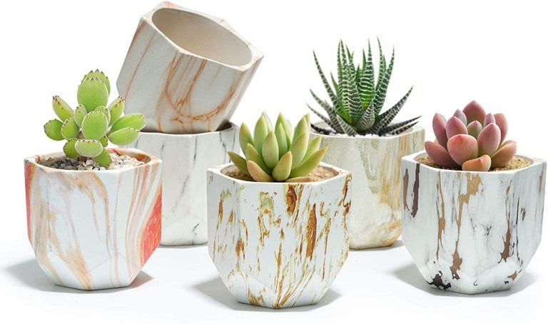Macetas para Cactus de Cemento,
